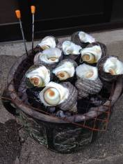 grilled whelks