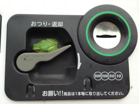 vendingmachine frog